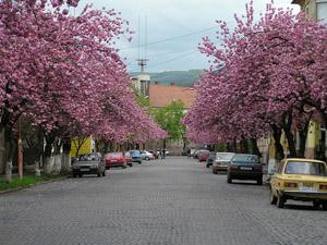 вулиця Івана Маргітича (колишня Московська)